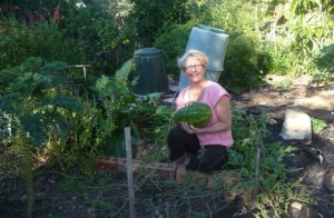 In her patch: Cheryl Webster says anyone can be a backyard farmer.